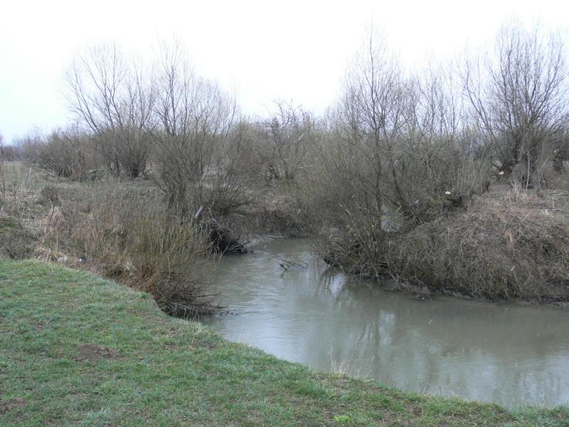Foto for Castor habitat